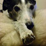 Greyhound florist