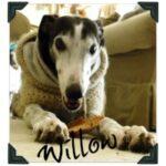 Willow Says greyhound blog
