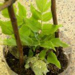 mini rainforest terrarium planted