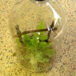 Recycled bottle rainforest terrarium