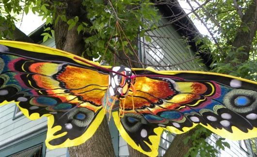 butterflykite