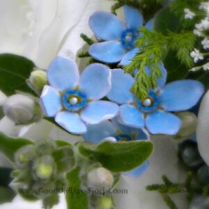 forget me nots tweedia