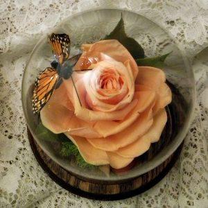 preserve drose flowers