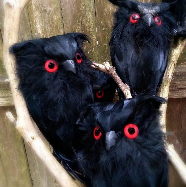 feathered black owl