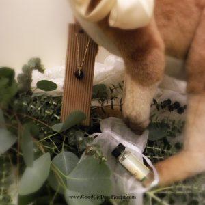 eucalyptus project kit